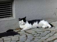 Kočka na Samtgasse