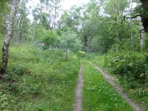 Třešňovice (Kirschbaum) - střed zbořené vesnice