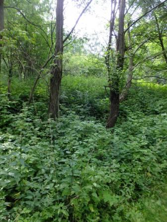 Třešňovice (Kirschbaum) - zde zřejmě stál dům