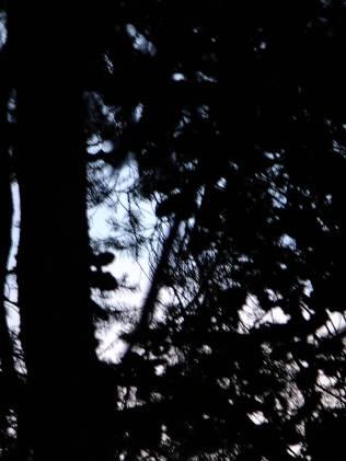 Pohled do větví